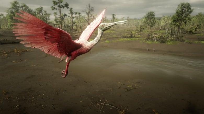 game photography rdr2 bird-1